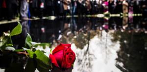 Rose am Denkmal für die im Nationalsozialismus ermordeten Sinti und Roma Europas, Foto: Marko Priske